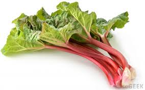 RHUBARB IN SEASON